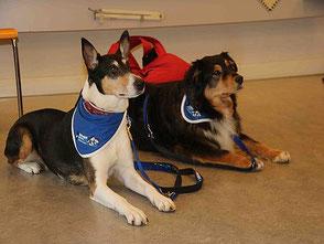 Prevent a bite Hunde Hund Kinder Kind Hundebiss vorbeugen Beissvorfall  Training Wissen spielen streicheln kindgerecht