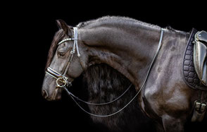 Videoblog für Pferd und Reiter