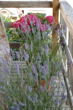 Dinkelkissen Lavendel