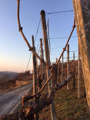 Die Winzlinge | Weinberge Lemberger