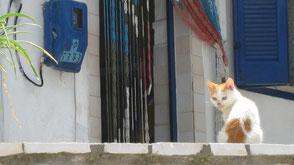 Katze sitzt auf Mauer vor einem griechischen Haus.