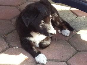 Lucy mit 14 Wochen