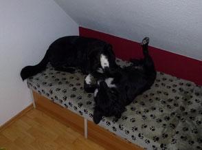 Lucy & Shadow beim spielen