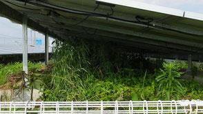 太陽光発電雑草トラブル