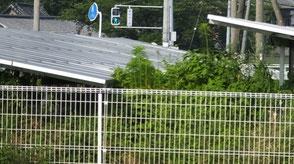 太陽光発電雑草