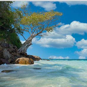 Küste Koh Samui