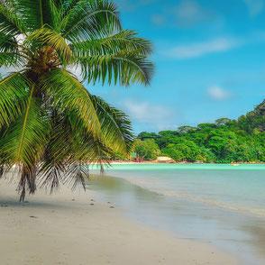 Seychellen Strand mit Palme
