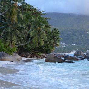 Seychellen Strand Palmen