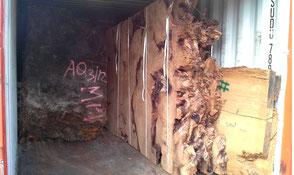 Transport Kauri Wurzel Tischplatten von Neuseeland nach Deutschland, Beaupoil fertigt daraus beispiellose Holztische Esstische