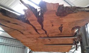 Riesige Kauri Holz Tischplatte aus Wurzel Stamm, einzigartiger Massivholztisch und exklusives Tischunikat, großer Baumstammtisch aus tausendjährigem Sumpfholz Neuseeland