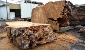 Riesige Kauri Wurzel für besondere Naturholztische, einmalige Massivholztische,  unvergleichliche Esstische