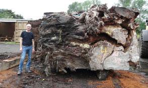 Beaupoil Michael vor tausendjähriger Kauri Wurzel Neuseeland für ausgefallene Holztische spezielle Esstische