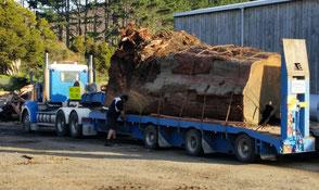 Kauri Baum Transport für Anfertigung von ausgefallenen Massivholztischen, exklusives Designertischen, große Konferenztische
