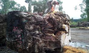 Zuschnitt von großer Sumpf Kauri Wurzel für extravagante Holztische, kostbare Esstische, massive Designertische