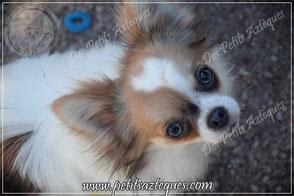 elevage de chien en France