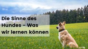 hundewissen, hundetraining