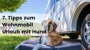 wohnmobil urlaub mit hund, camping mit hund