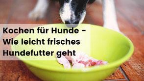kochen für hunde, rohfütterung für hunde