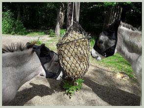 Deze vliegenmaskers met oorbeschermers  zijn ideaal voor paarden, niet voor ezels. De afmeting van de oren zijn niet aangepast aan de lange oren van onze ezel.