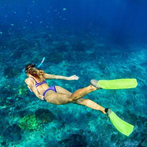 Unterwasser Guadeloupe, Karibik, Karibische Inseln