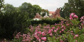 Rosenbeet vor dem Stierbrunnen am Arnswalder Platz Berlin. Foto: Helga Karl