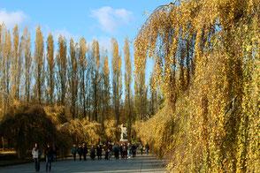 Denkmal Mutter Heimat im Sowjetischen Ehrenmal Treptow, umgeben von Pappeln mit goldfarbenen Herbstblättern. Foto: Helga Karl