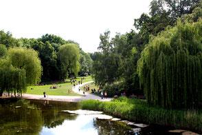 Rudolph-Wilde-Park in Schöneberg mit Teich, Trauerweide und Wiesen zum Erholen, spielen und Sonnenbaden. Foto: Helga Karl