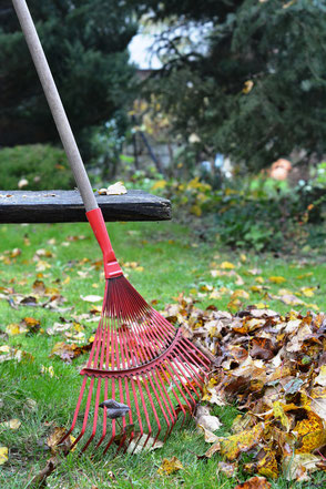 Herbstlaub beseitigen