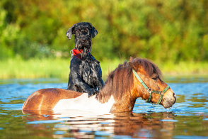 In der Tierhaltung und Zucht