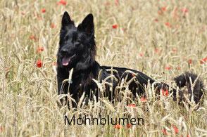 Donna - Mohnblumen