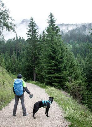 Wandern mit Hund, Reisen mit Hund, Wandern in Tirol, Dalfalzer Wasserfall, Achensee, Urlaub mit Hund, Bergurlaub mit Hund