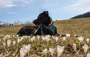 Wandern mit Hund, Urlaub mit Hund, Bergurlaub mit Hund, Wandern in Bayern