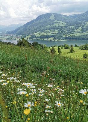 Alpsee Allgäu Siedelalpe Oberallgäu