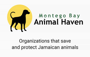 Montego Bay Animal Haven Logo - Organization that save and protect Jamaican animals