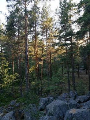 Wie der finnische Wald meine Seele heilte - Finnweh Blogparade