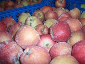 Яблоки подготовлены для переработки и сушки
