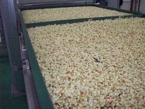 Яблоки нарезанные кубиком для сушкиб оборудование Hans Binder