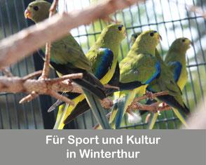 Für Sport und Kultur in Winterthur