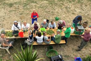 Die Gruppe Grün bei der Ernte