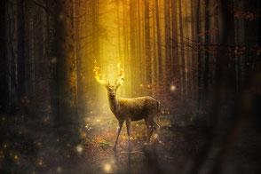Hirsch mit feurigem Geweih im Wald