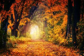 Herbstliche Baumalle mit Licht am Ende