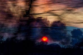 www.visovio.de| projekt flying landscape eye of ra | visovio | 032013 | baum, untergehende sonne, colour fine art, fotokunst