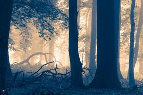 www.visovio.de| violetta steinhübel - projekt waldzauber nebelwaldkreaturen | visovio  092014 | baum, wald, nebel, magisch, colour fine art, fotokunst