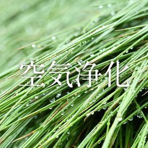 い草は「スポンジ構造」なため、二酸化炭素やホルムアルデヒドの吸着能に優れています。