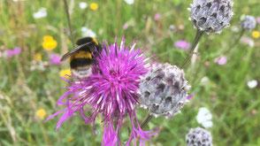 BlütenBunt - InsektenReich