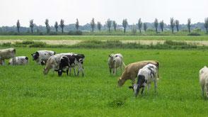 Grünlandwirtschaft Moor