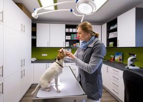 Tierärztliche Praxis Jörn-M. Steffens Bahrenborstel - Zahnuntersuchung