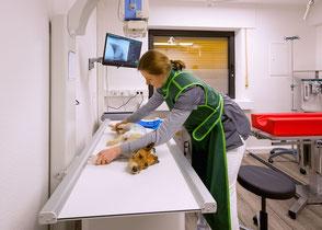 Tierärztliche Praxis Jörn-M. Steffens Bahrenborstel - Röntgen