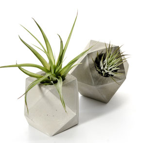 Cuboctahedron Concrete Air Plant Holder by PASiNGA
