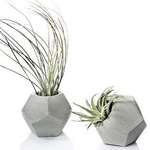 Dodecahedron Concrete Tillandsia Air Plant Vase by PASiNGA